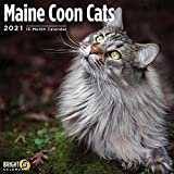 Maine Coon Cats 2021