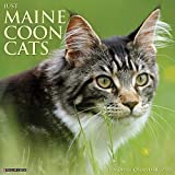 Just Maine Coon Cats 2021 Calendar